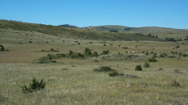 Les grandes étendues du Causse Méjean.