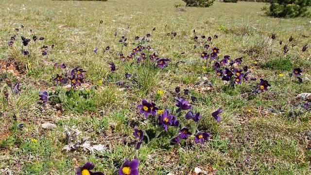 fleurs causse