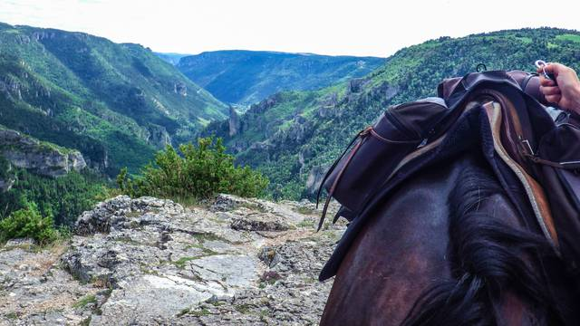 horse in the tarn river canyon