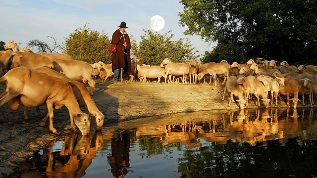 un berger en tenue traditionnelle faisant boire son troupeau de brebis dans une lavogne.
