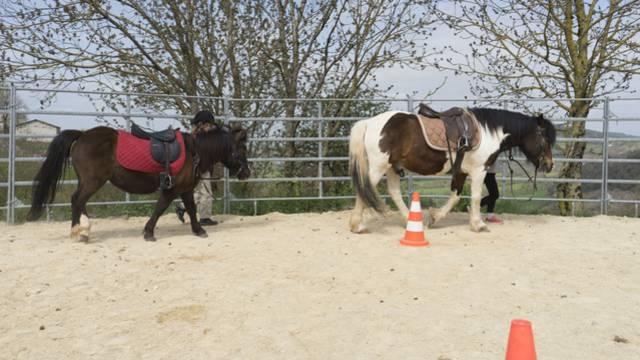 poneys et enfants