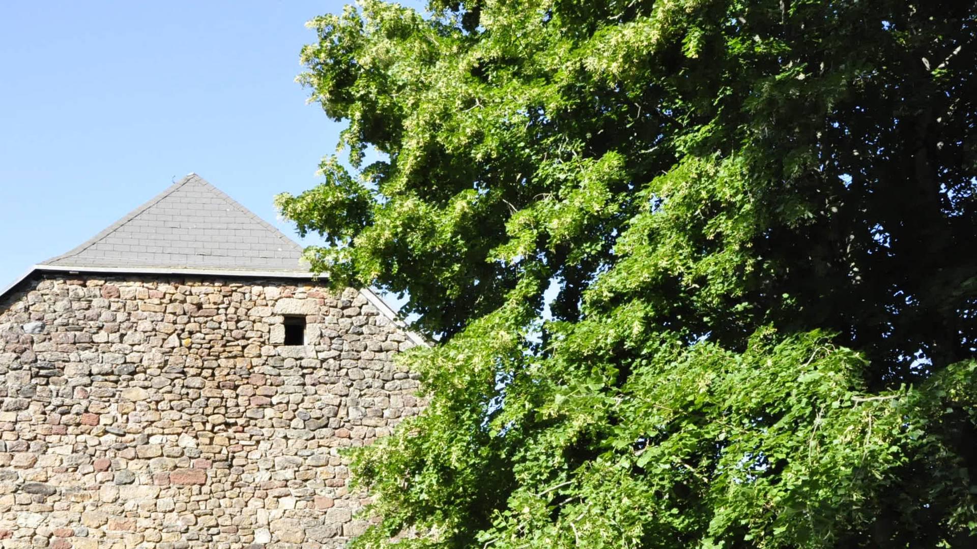 Tilleul arbre de la Vallée du Lot