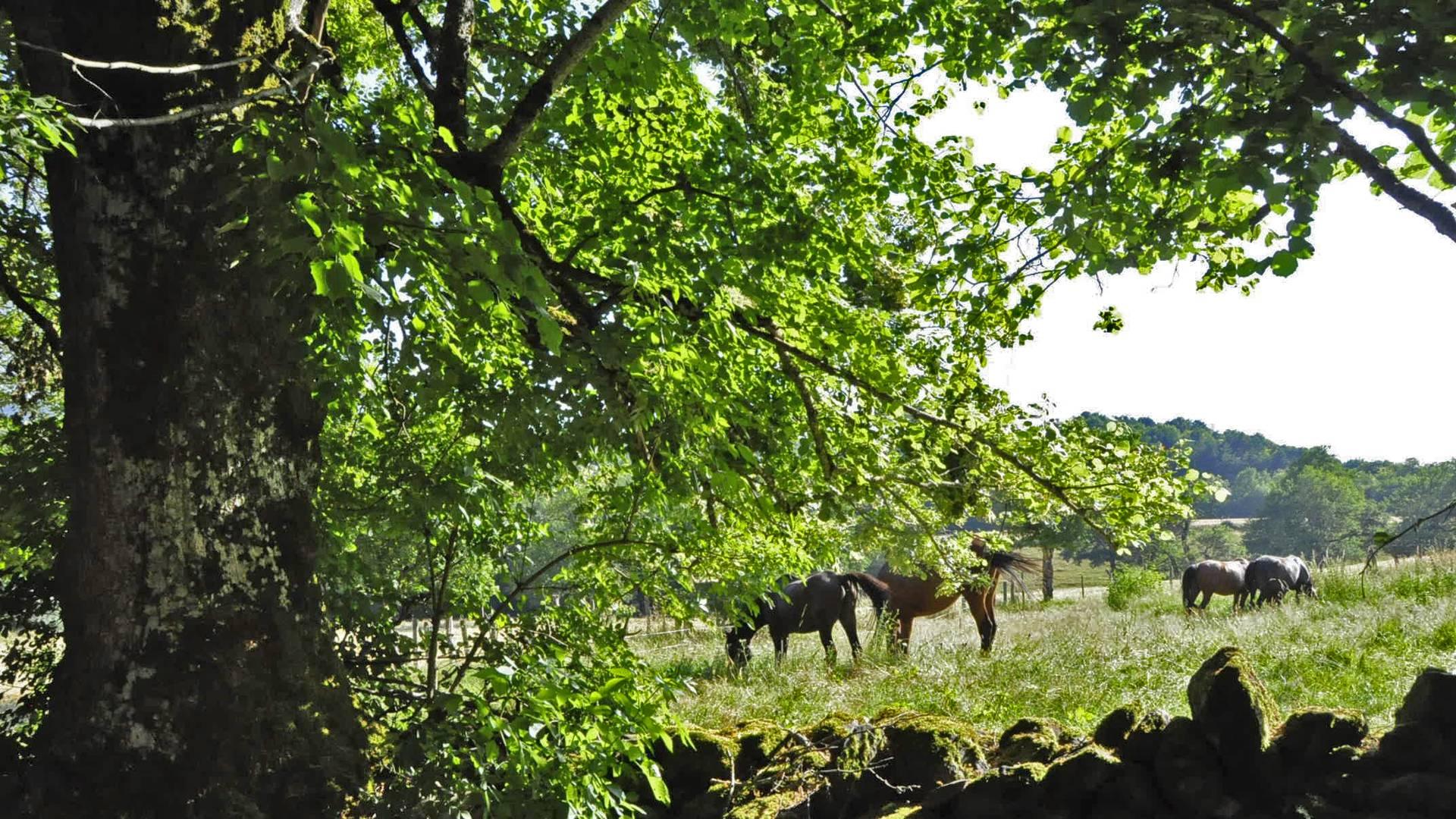 Chevaux et arbres dans la Vallée du Lot