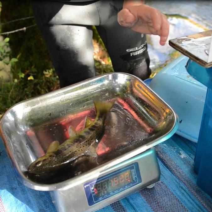 pêche truite Lozère